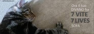 gatti divani ora il tuo divano ha 7 vite cat friendly sofa
