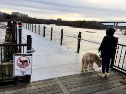 dogs are not banned on potterfield bridge but some injuries