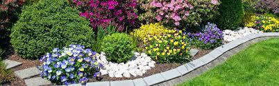 fertiliser for native plants safe u0026 easy to use fertilisers for all gardens and lawns
