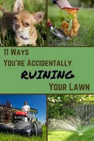 the 25 best common lawn weeds ideas on pinterest common garden