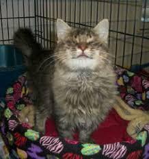 Blind Cat Sanctuary Blind Cat Rescue U0026 Sanctuary Inc Blind Cat Sanctuary And Fiv