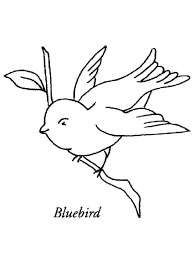 bluebird coloring pages download print bluebird coloring pages