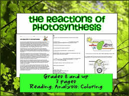 What Happens During The Light Dependent Reactions Of Photosynthesis Best 25 Light Independent Reactions Ideas On Pinterest The Cell
