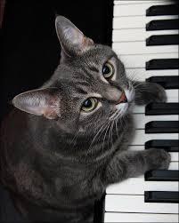 nice 29 cat playing piano meme wallpaper site wallpaper site