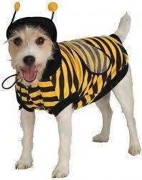 rubie u0027s costume company bumble bee dog costume x large chewy com