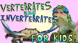 learning about vertebrates and invertebrates youtube