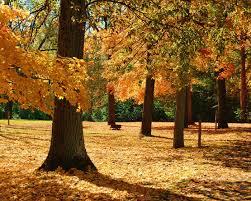 stunning fall foliage 10 parks ohio