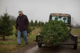 60 000 christmas trees in family owned ohio farm
