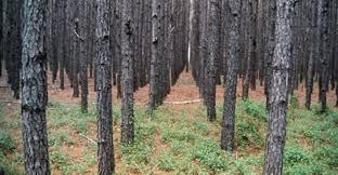 Alabama forest images Alabama timber industry facing tough times southeast farmpress gif