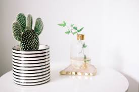 how to care for your house plants u2013 poppy deyes