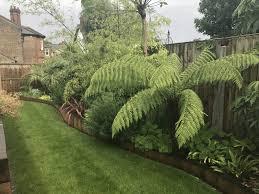 small family garden jungle garden the constant gardener based in chelmsford
