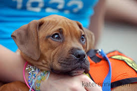 3 month boxer dog michael trott u0027s dog training and adoption event blog i don
