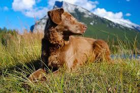 affenpinscher swimming 8 dog breeds that can u0027t wait to go swimming u2013 iheartdogs com