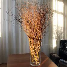 curly willow branches curly willow branches 100