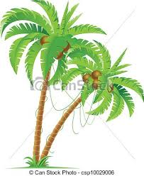 two palm trees illustration for design on white background vector