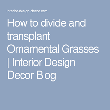 how to divide and transplant ornamental grasses interior design