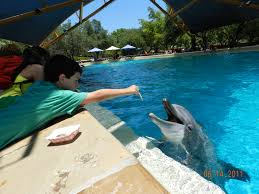 san antonio zoo a southern u0027s way of life