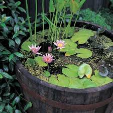 a whisky barrel pond in our backyard garden would be nice 2r
