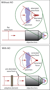 roadmap on neurophotonics iopscience