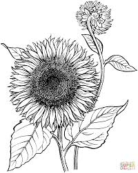 42 printable flower coloring pages print color craft
