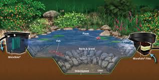 Fish For Backyard Ponds Fish Ponds U2013 Baltimore Maryland Ponds And Waterfalls