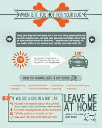Warm Situation The Heat Is On The Hazards Of Dogs In Cars The Daily Corgi