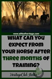 1203 best everything equestrian images on pinterest horse