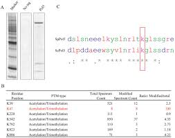 Anti Flag Affinity Gel Dna Polymerase 5 Acetylation By Eso1 Is Essential For