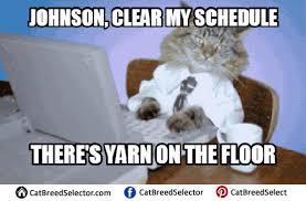 Meme Business Cat - business cat memes cat breed selector