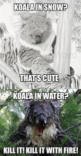 Koala Meme - koala in snow water animals know your meme