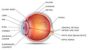 What Is The Blind Spot Retina Surgery Anh Nguyen Ophthalmology