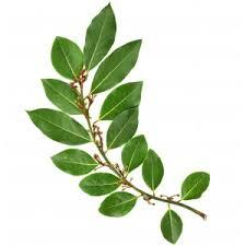 laurier cuisine tisane et condiment laurier sauce feuille herboristerie ormenis