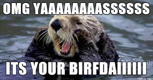 Sea Otter Meme - signif i can t otter meme on imgur