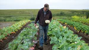 tundra native plants alaska farmer turns icy patch of tundra into a breadbasket the