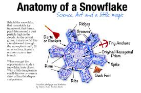 anatomy of a snowflake science art and a little magic