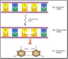how ultraviolet light kills bacteria microbiology online radiation a sterilization method