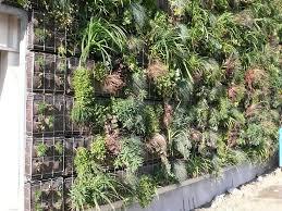 Deco Mur Exterieur Idée Déco Et écolo Pour L U0027extérieur Le Mur Végétal Déco Facile