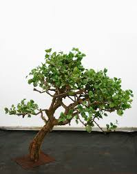 palmbrokers catalogue artificial trees plants for hire