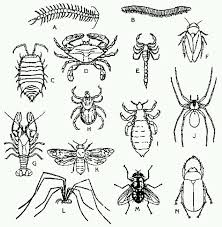 coloring pages insects bugs insect coloring page coloring pages pinterest insects and crafts