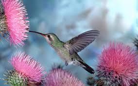 best wallpaper hd 1080p free download 1366 768 birds page 12