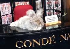 Vogue Reception Desk Pressreader Daily Mail 2017 03 08 Rabbits On Reception At