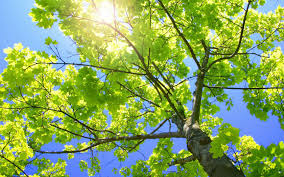 commercial domestic tree consultancy northern heights tree