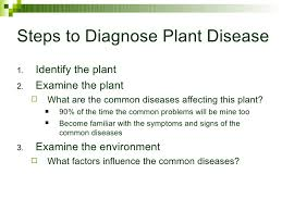 Plant Disease Diagnosis - introduction to greenhouse diseases seminar for progreen2009