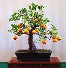 shop free shipping 50pcs pack mini potted edible orange