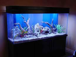 aquarium decorations freshwater aquarium decoration ideas aquarium decor pinterest