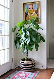 Beautiful House Plants House Entrance With House Plant And Framed Wall Painting