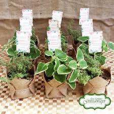 Flower Pot Wedding Favors - variegated oregano and thyme wedding favors wedding favors