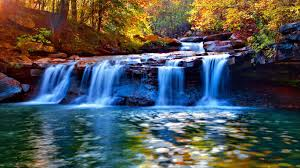 waterfalls nice quiet serenity forest branches cadcades calmness