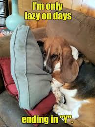 Law Dog Meme - basset hound law 36 imgflip