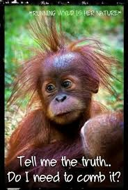 Funny Monkey Meme - funny baby monkey pictures with captions allofpicts